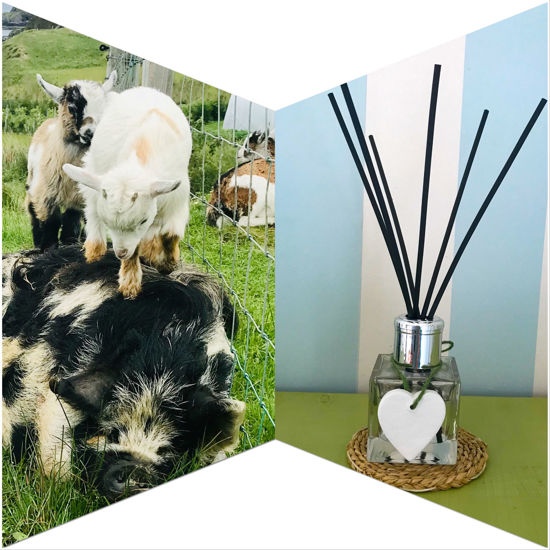 Betty's Bliss Reed Diffuser