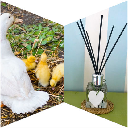 Fluffy Ducklings Reed Diffuser